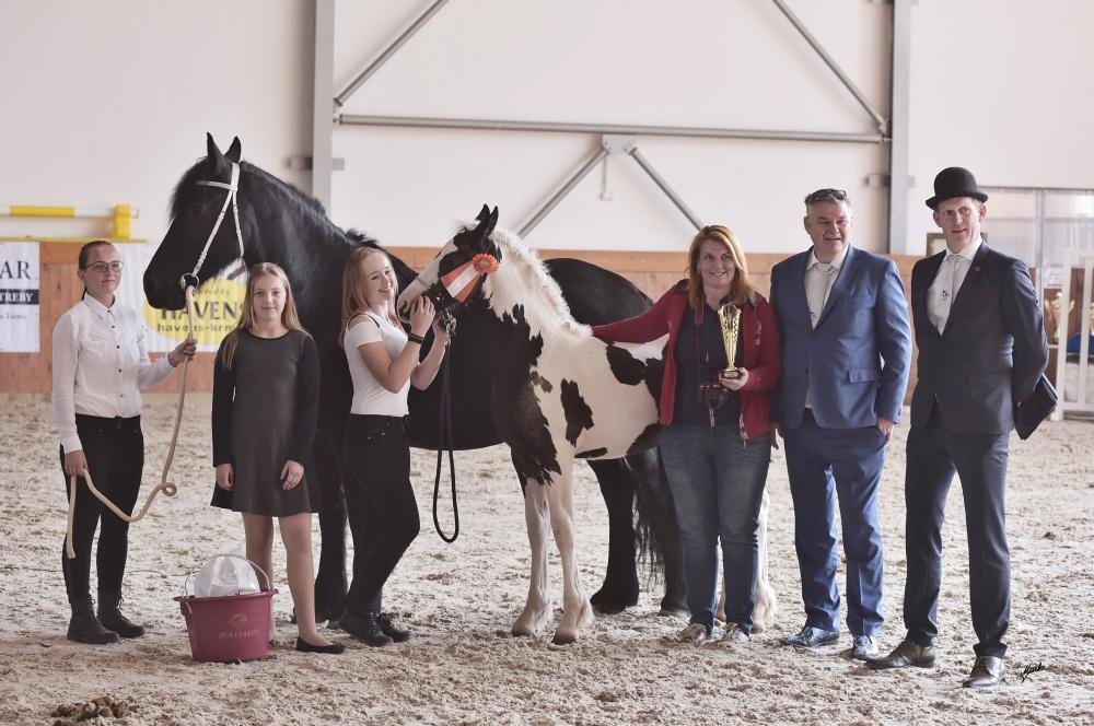 MLADÍ   YOUNG HORSES de865de216